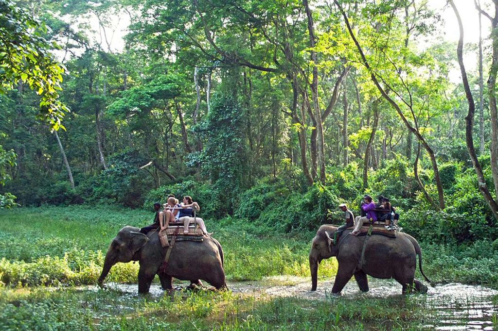 Wildlife Tour Nepal Elephants